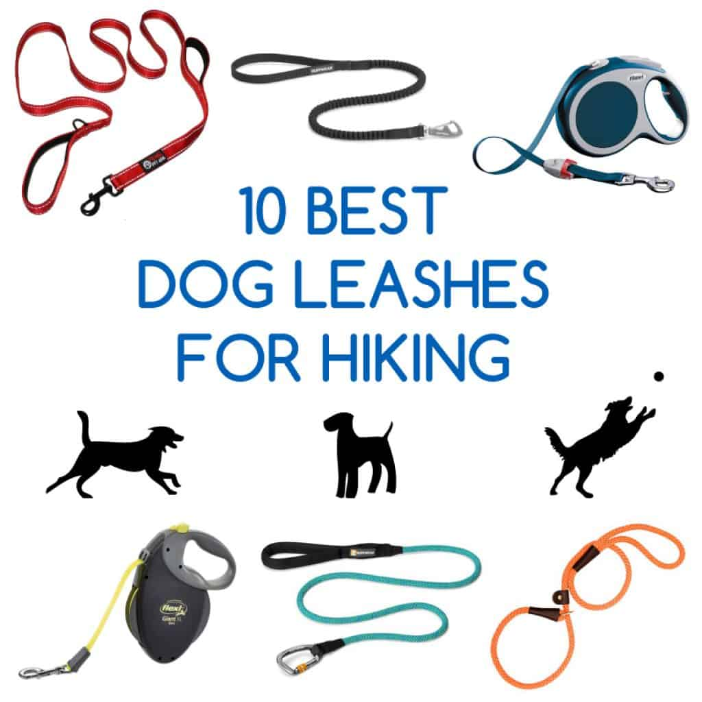 10 best dog leashes for hiking